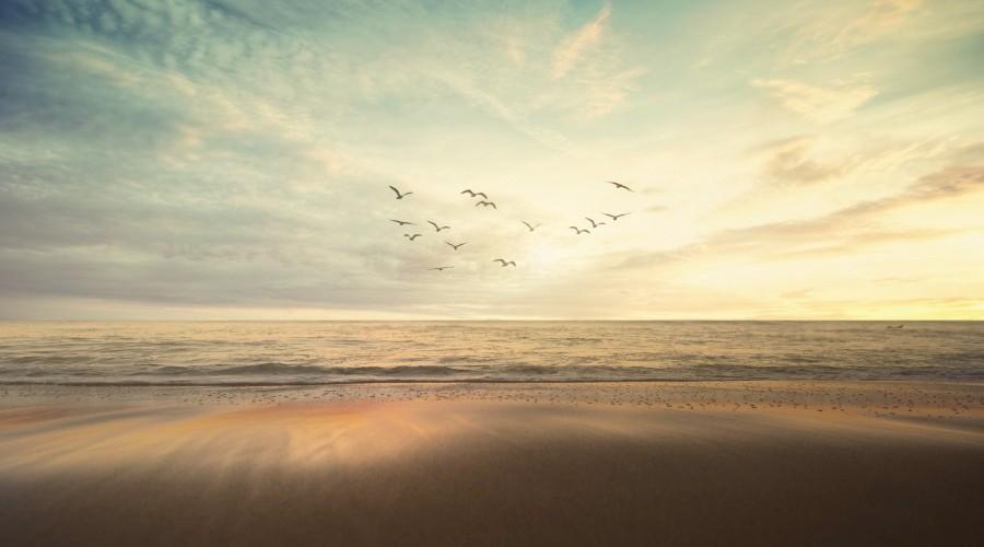 Volez plus haut avec l'agence de publicité Birds